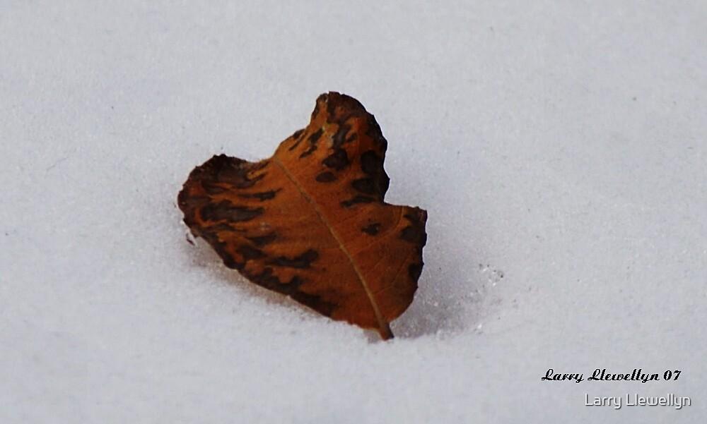 A Fallen Leaf meeting its Fate by Larry Llewellyn