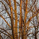 A Tree in the Morning Sun by Eileen McVey