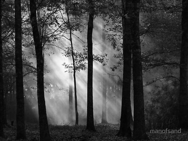 The mist in the trees by manofsand