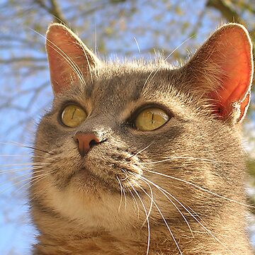 Feline Face by jillspring