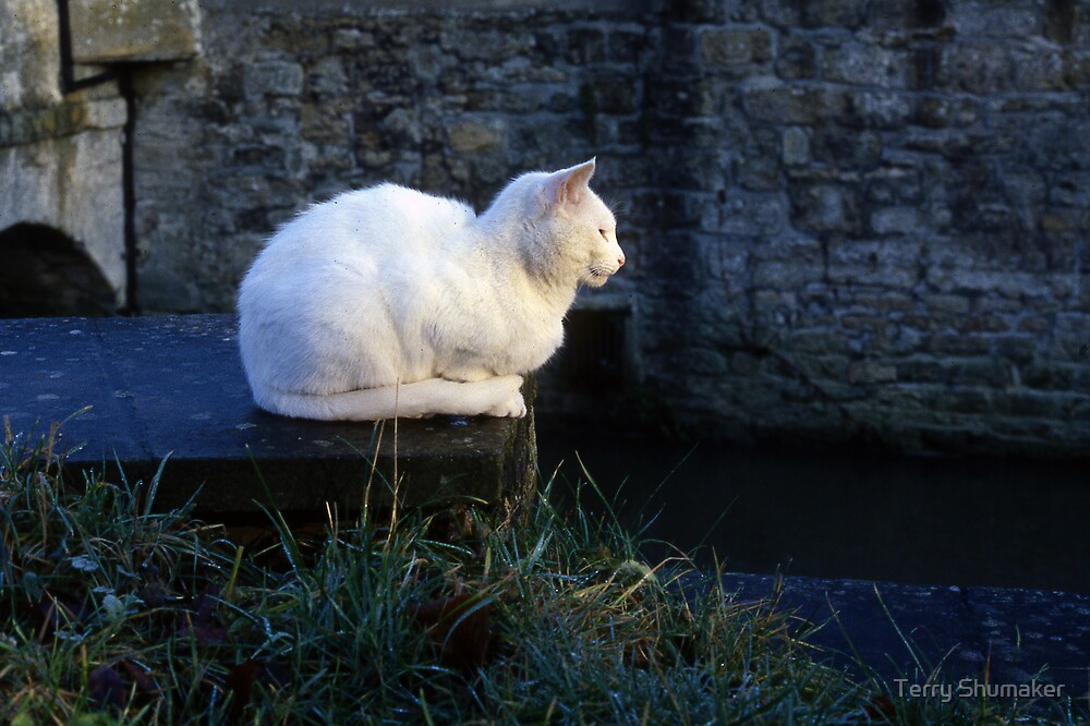 A Cat At Oxford by Terry Shumaker