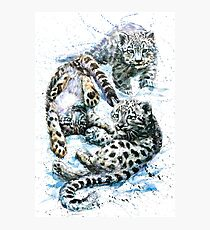 Little snow leopard Photographic Print