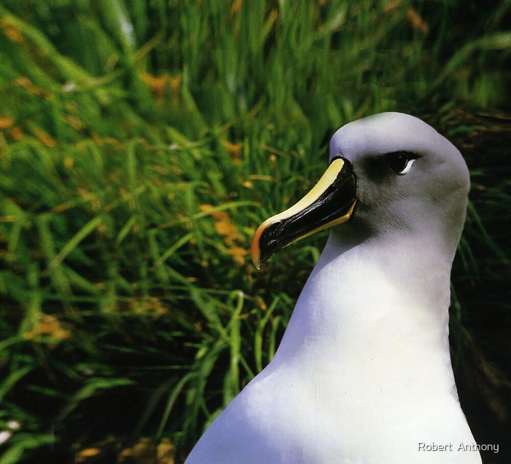Albatross by Robert  Anthony