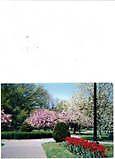 Boston Public Gardens in Spring by Jackie Lilly-Dienst