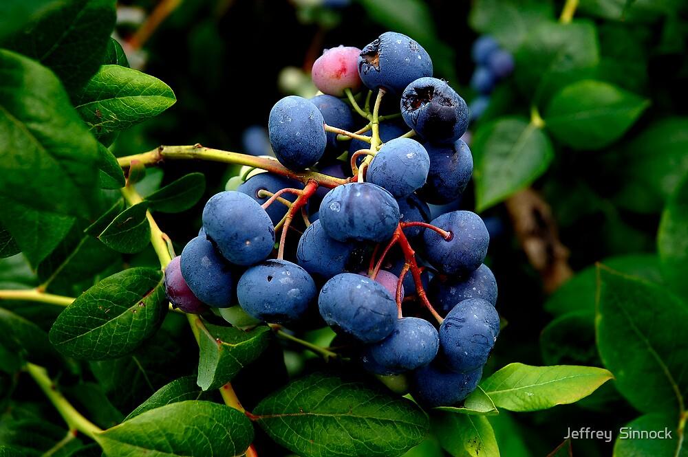 Blue Berries by Jeffrey  Sinnock
