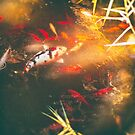 Pond by Silvia Ganora