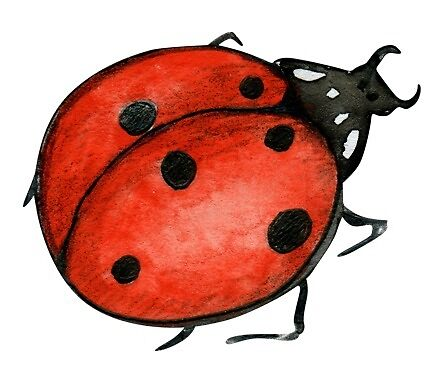 One little ladybird, watercolour painting by Sandra O'Connor