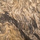 Old tree bark texture fragment by Irina777