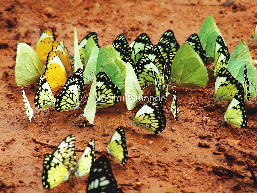 Colours United by Nasibu Mwande