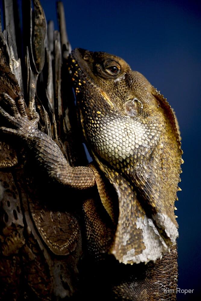 Reptilian Gaze by Kim Roper