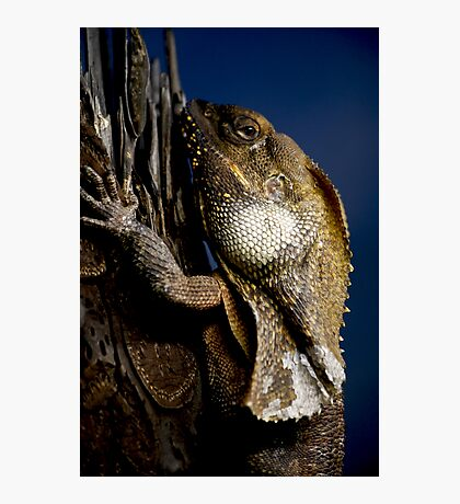 Reptilian Gaze Photographic Print
