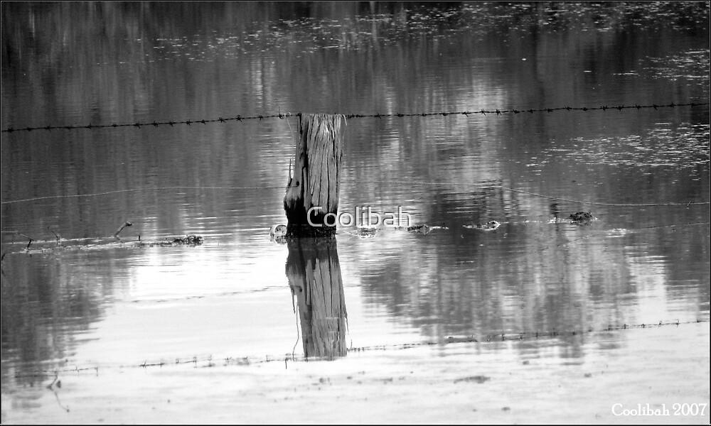 Underwater by Coolibah