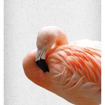 Flamingo 09 von froileinjuno
