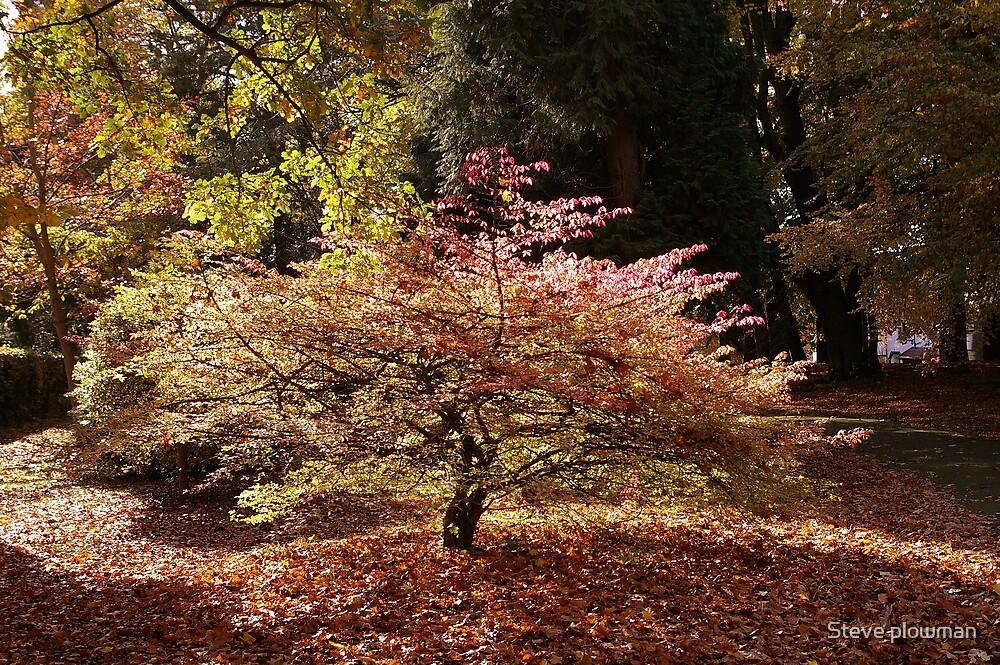 Golden tree 2 by Steve plowman