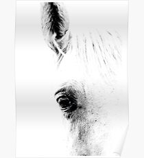 Horse 01 Poster