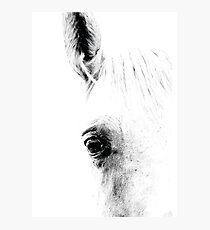 Horse 01 Fotodruck