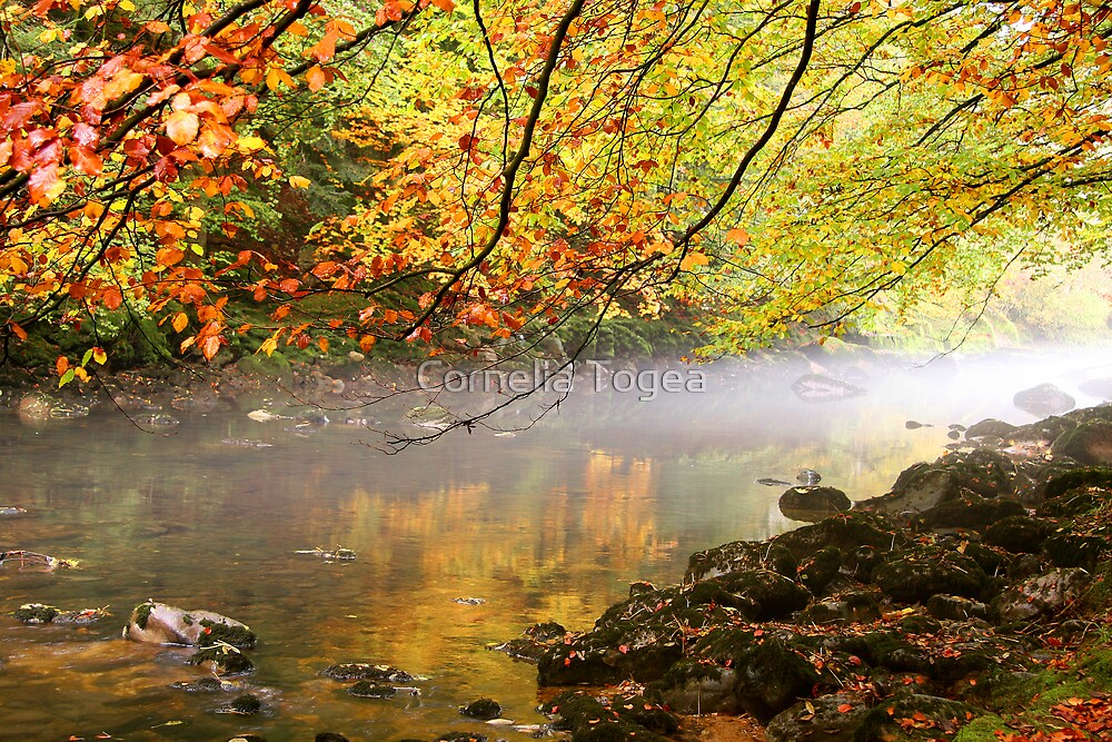 misty river by Cornelia Togea