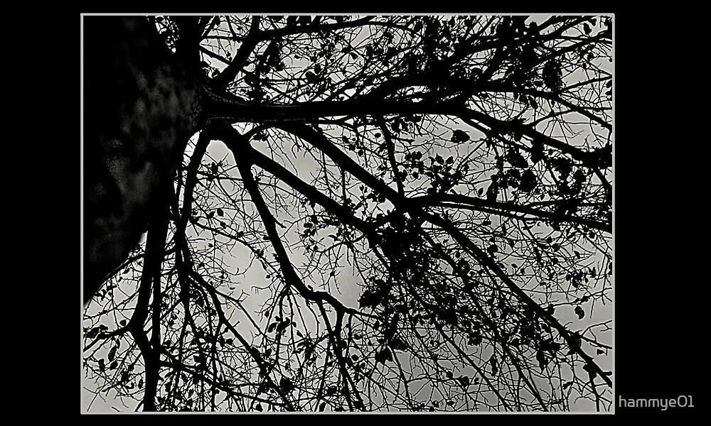 Looking Up by hammye01