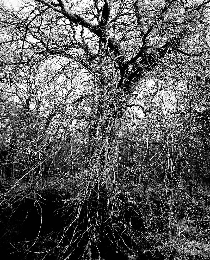 Black and White Tree by rayrayshep
