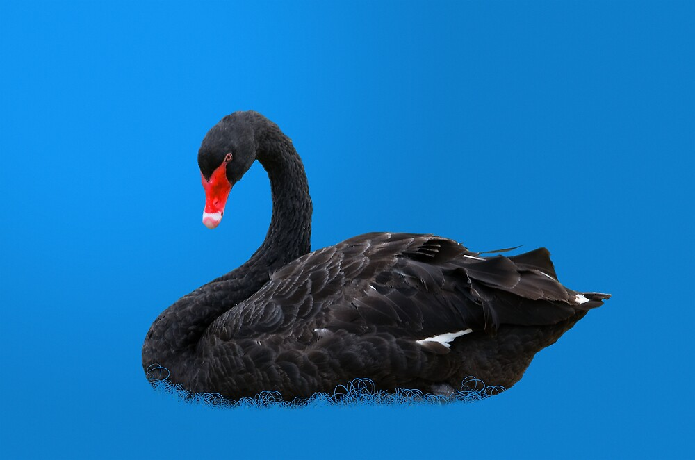 Black Swan in Blue by Delores Knowles