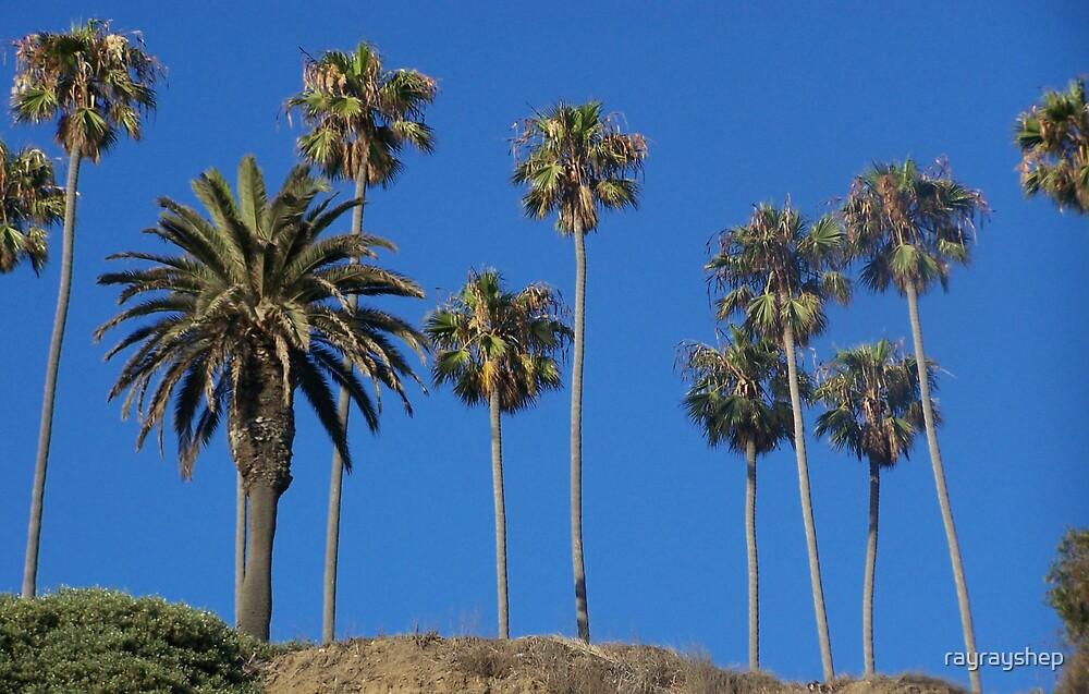 Plam Trees by rayrayshep