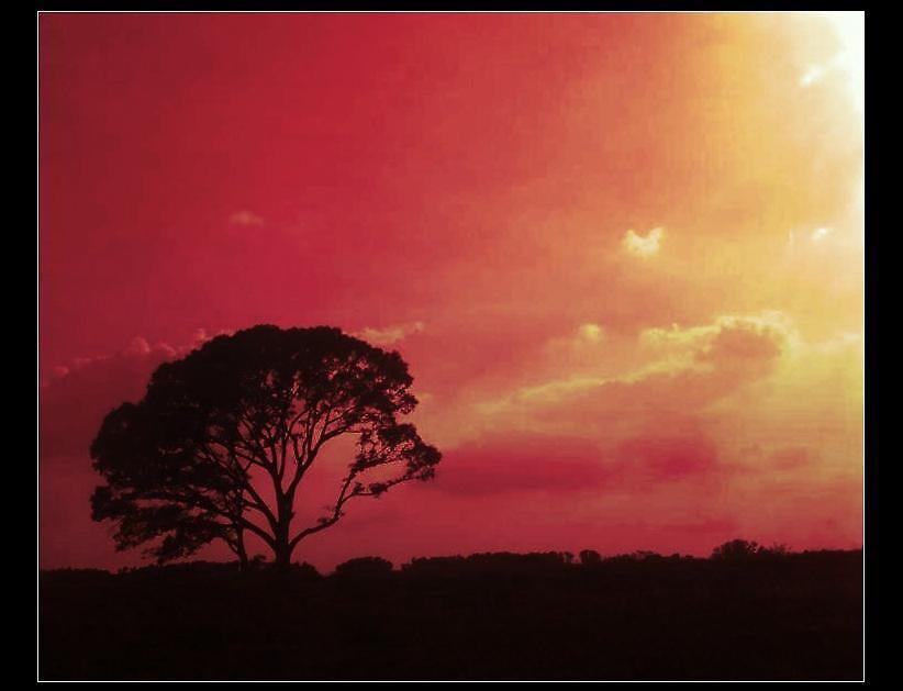 Sunset by MorbidPuppet