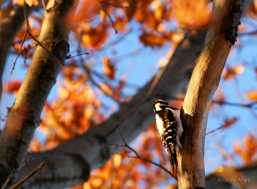 wOod pecKer by Andrew Mark