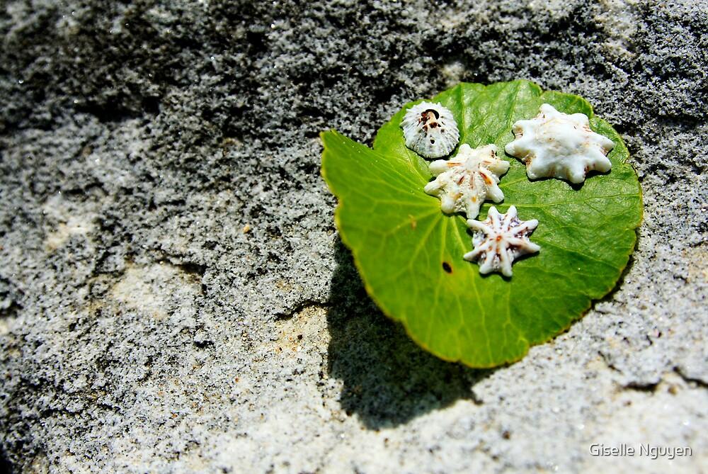 Shells on Stone by Giselle Nguyen