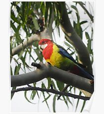 Lory Poster
