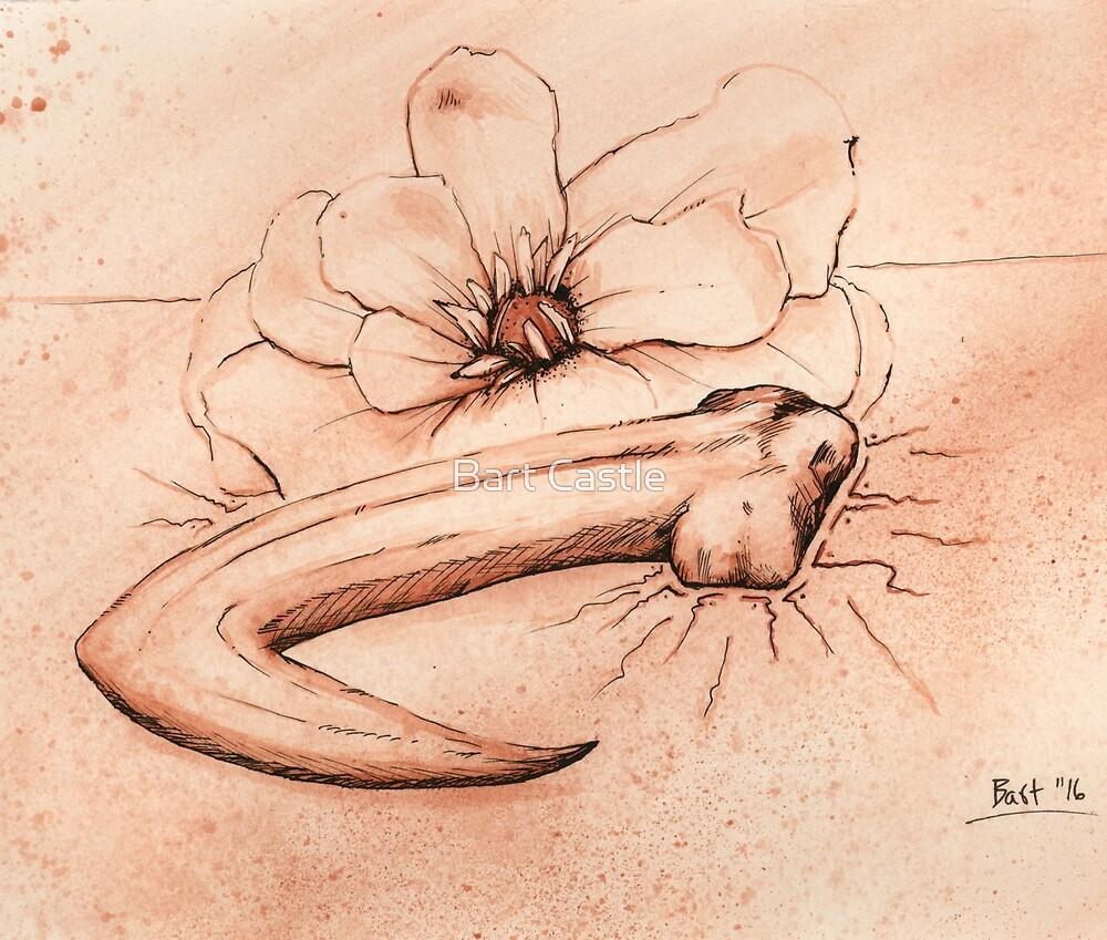 Raptor Magnolia by Bart Castle