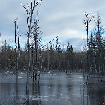 Freezing Swamp by nmpics