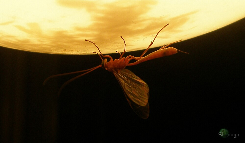 Wispy Waspy by Shannyn