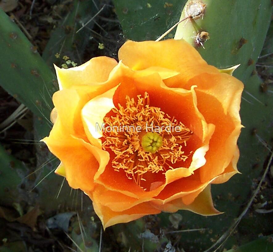 Flowering Cactus  by Moninne Hardie