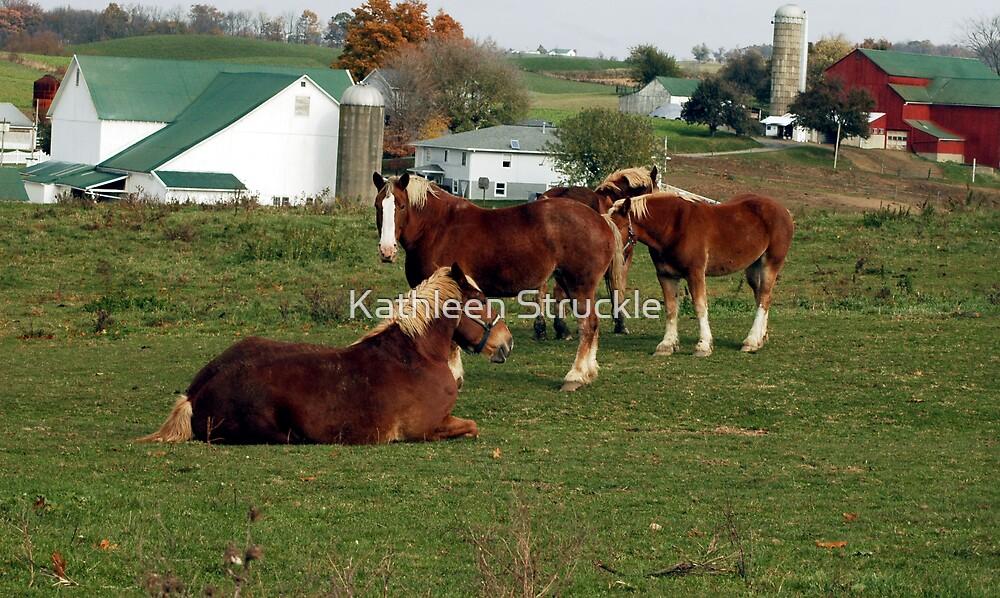 Horses On Farm by Kathleen Struckle