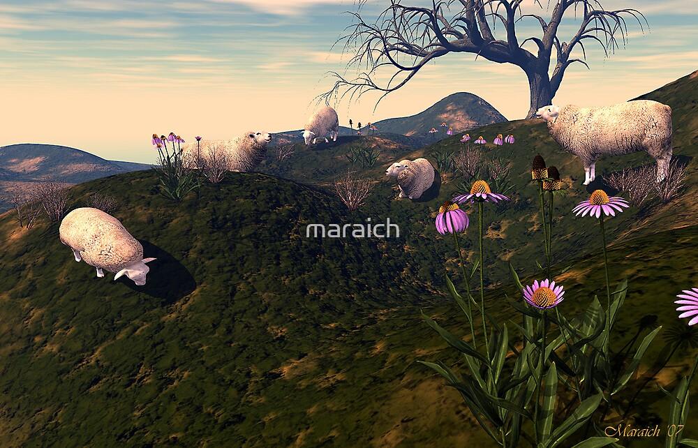 Counting Sheep by maraich