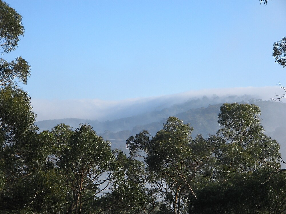 misty morning by Amanda le Bas de Plumetot