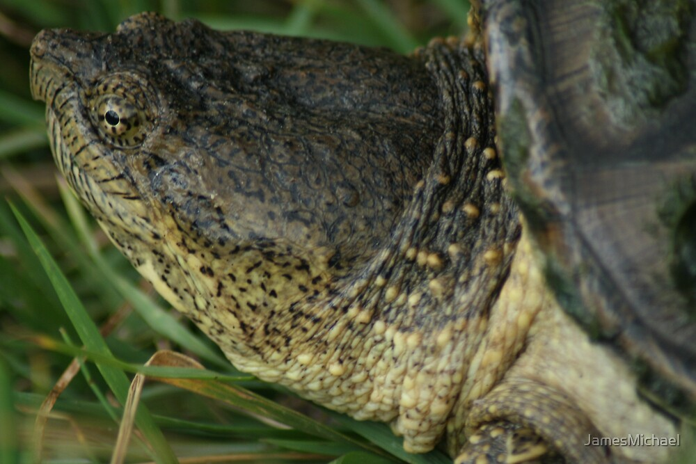 Snapping Turtle by JamesMichael