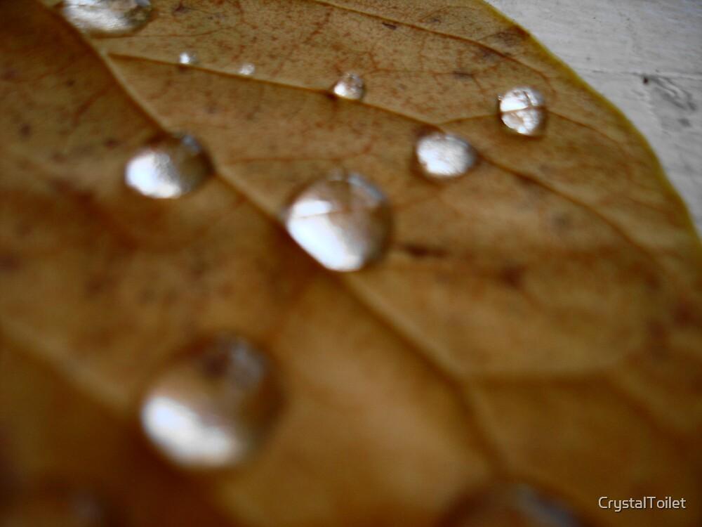Rain Drops by CrystalToilet