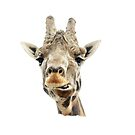Funny Face Giraffe by Doty