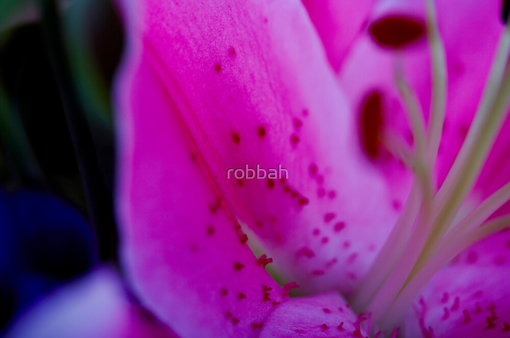 Lilly 2 by robbah