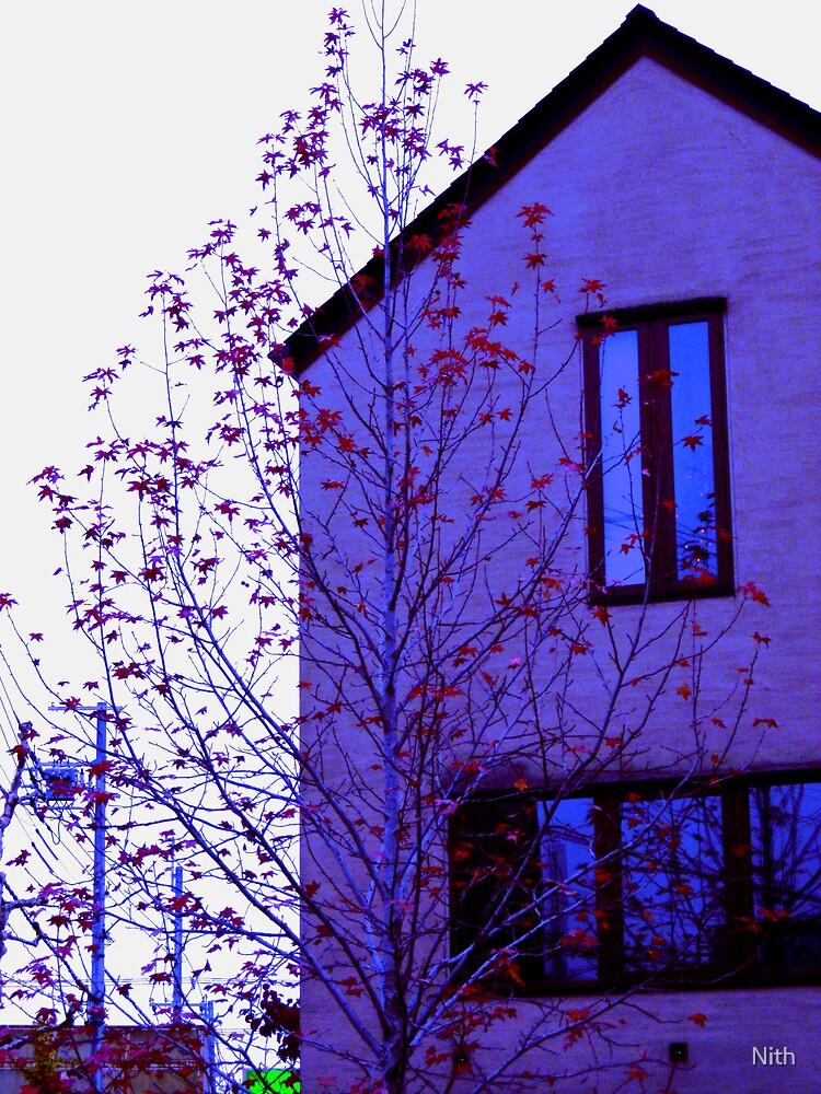 Autumn tree by Nith