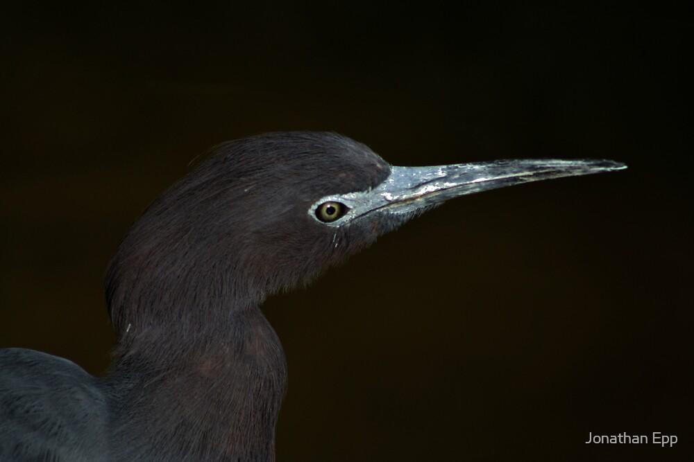 Birds Eye View by Jonathan Epp