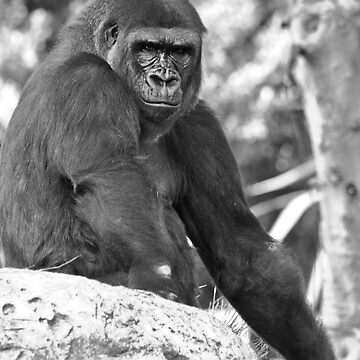 Gorilla primate animal by JonathanEpp