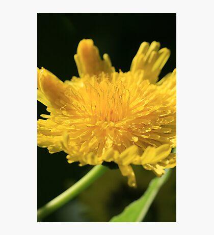 Natural Shine Photographic Print