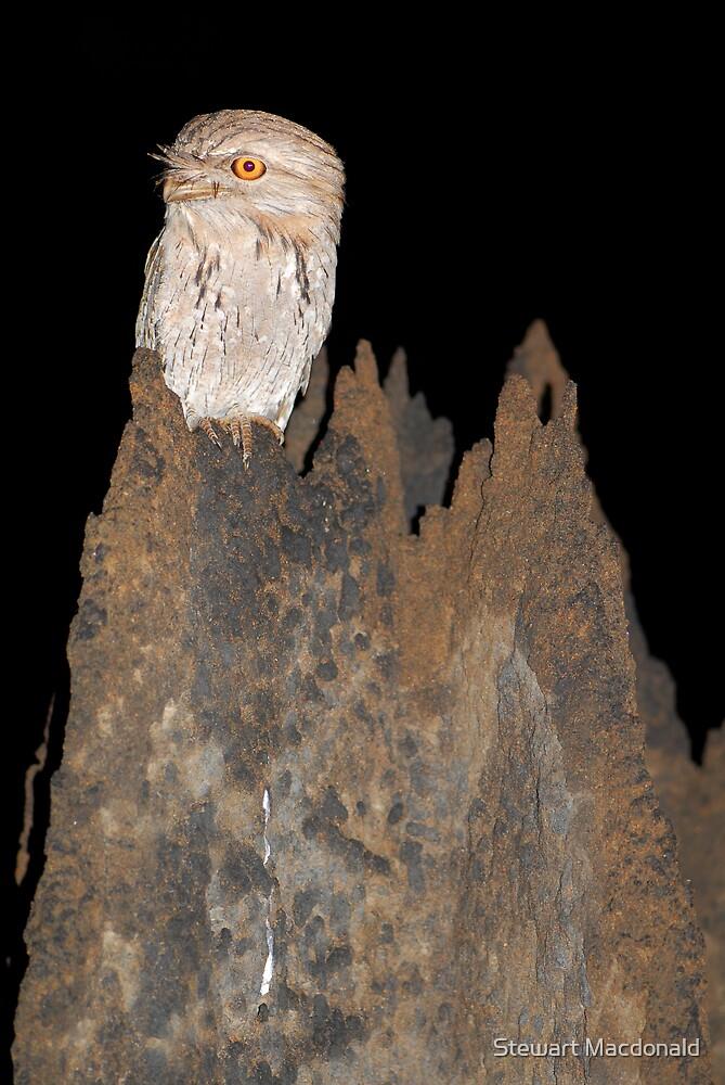 Tawny frogmouth by Stewart Macdonald