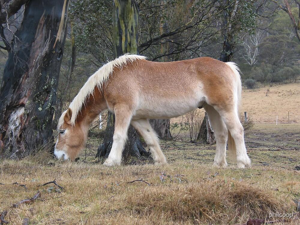 Pony by philcoop