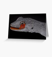 Northern spiny-tailed gecko Greeting Card