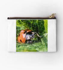 Ladybird (Coccinellidae) Studio Pouch