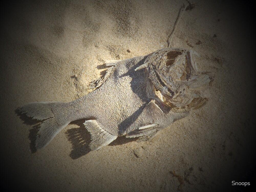 fish folly by Snoops