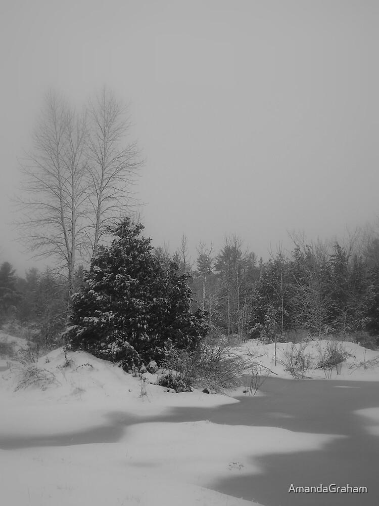 Winter wonderland by AmandaGraham